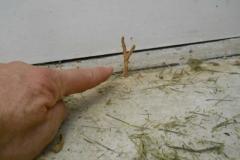 termite-tube