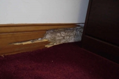 termites-in-office-slab-on-grade