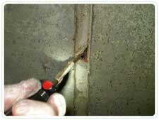 Termite and WDI Inspections