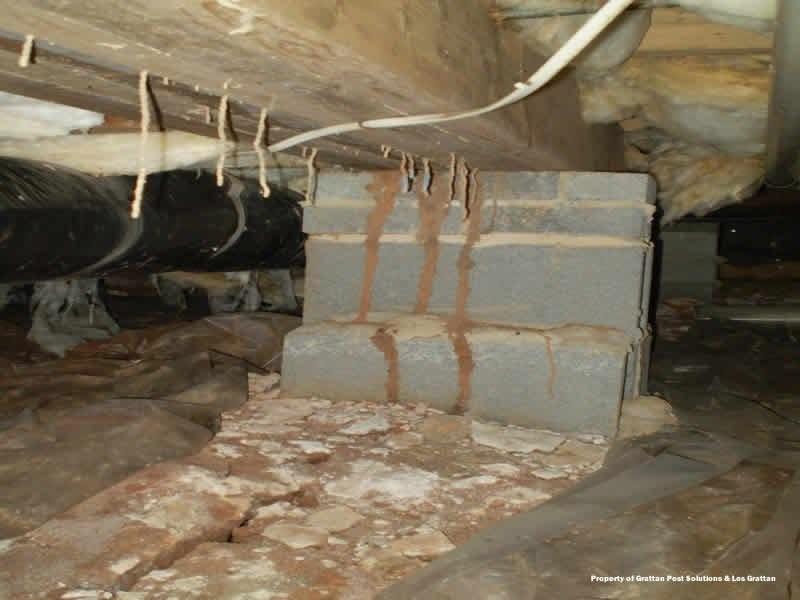 subterranean termites tubing up into girder