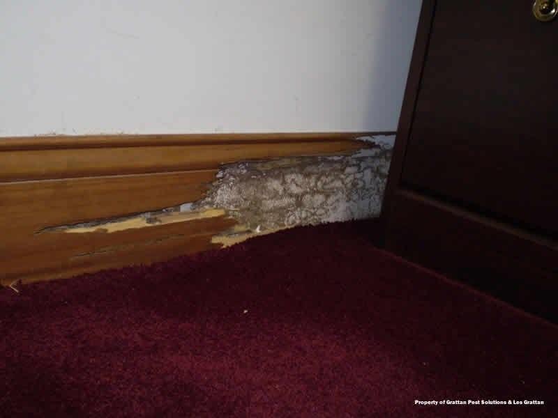 termites in office slab on grade